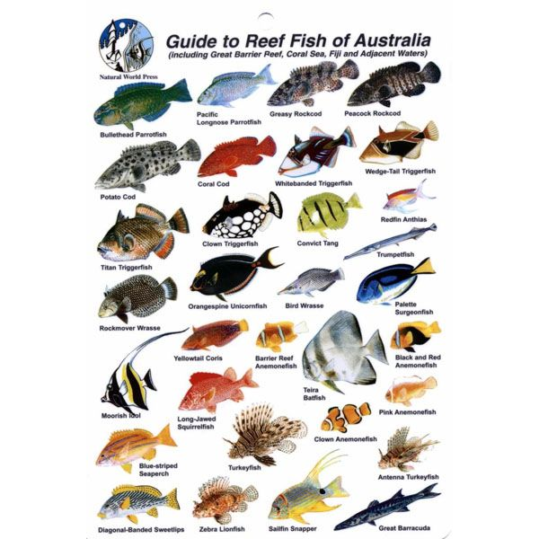 Fish ID Card Australia, Coral Sea and Barrier Reef
