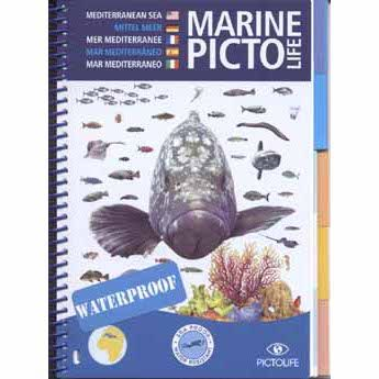 Marine Pictolife Mediterranean Sea